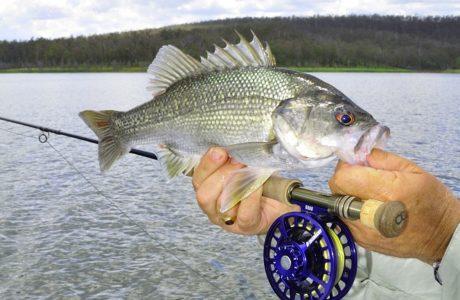 Fly Caught Bass