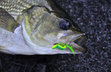 Gurgler Bass