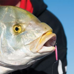 Hervey Bay Fishing Trips