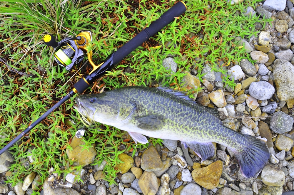 Murray Cod On Bass Gear Guided Fishing Downunder