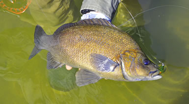 Freshwater Fishing the Fraser Coast With Guided Fishing Down