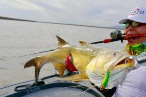 Mr Kimura 2019 – 115cm King Threadfin